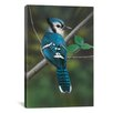 <strong>iCanvasArt</strong> 'Blue Jay' by Clarence Stewart Photographic Print on Canvas