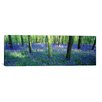 <strong>iCanvasArt</strong> Panoramic Bluebells in a Forest, Charfield, Gloucestershire, England Photographic Print on Canvas