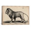 iCanvas 'A Lion Standing' by Wenceslaus Hollar Graphic Art on Canvas