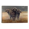 iCanvasArt 'Cape Buffalos' by Harro Maass Graphic Art on Canvas