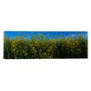 iCanvas Panoramic Canola Flowers in a Field, Edmonton, Alberta, Canada Photographic Print on Canvas