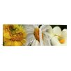 <strong>iCanvasArt</strong> Panoramic Yellow and White Flowers Photographic Print on Canvas