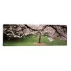<strong>iCanvasArt</strong> Panoramic Cherry Blossom Tree in a Park, Golden Gate Park, San Francisco, California Photographic Print on Canvas