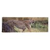 iCanvas Panoramic Cheetah Walking in a Field Photographic Print on Canvas