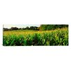 <strong>Panoramic Cornfield Maryland Photographic Print on Canvas</strong> by iCanvasArt