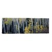 <strong>iCanvasArt</strong> Panoramic Aspen Trees in a Forest, Aspen, Pitkin County, Colorado, USA Photographic Print on Canvas