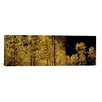 <strong>iCanvasArt</strong> Panoramic Aspen Trees in Autumn, Colorado, USA Photographic Print on Canvas