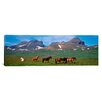 <strong>iCanvasArt</strong> Panoramic Horses Standing and Grazing in a Meadow, Borgarfjordur, Iceland Photographic Print on Canvas