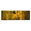 <strong>iCanvasArt</strong> Panoramic Aspen Trees in a Forest, Telluride, San Miguel County, Colorado, USA Photographic Print on Canvas