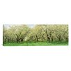 iCanvasArt Panoramic Rows of Cherry Tress in an Orchard, Minnesota Photographic Print on Canvas