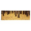 iCanvasArt Panoramic Low Section View of Pine and Oak Trees, Cape Cod, Massachusetts Photographic Print on Canvas