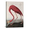 <strong>iCanvasArt</strong> 'Flamingo Drinking at Water's Edge' by John James Audubon Painting Print on Canvas