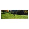 iCanvas Panoramic Horses Grazing in a Field, Kent County, Michigan Photographic Print on Canvas