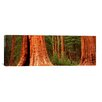 iCanvas Panoramic Giant Sequoia Trees in a Forest, California Photographic Print on Canvas