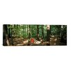 iCanvas Panoramic Hammock in a Forest, Baden-Wurttemberg, Germany Photographic Print on Canvas