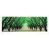 iCanvas Panoramic Hazel Nut Orchard, Dayton, Oregon Photographic Print on Canvas