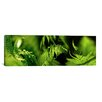 <strong>iCanvasArt</strong> Panoramic 'Fern' Photographic Print on Canvas