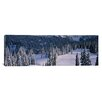 iCanvas Panoramic Fir Trees, Mount Rainier National Park, Washington Photographic Print on Canvas