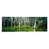 iCanvas Panoramic Field of Rocky Mountain Aspens Photographic Print on Canvas