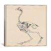 "iCanvasArt ""Dorking Hen Skeleton"" Canvas Wall Art by George Stubbs"