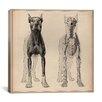 "iCanvas ""Dog Anatomy Skeleton Front View"" Canvas Wall Art by Wilhelm Ellenberger and Hermann Baum"