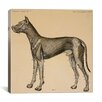 "iCanvas ""Dog's Anatomy: Anatomy of Lymph Vessels in Dog"" Canvas Wall Art by Hermann Baum"