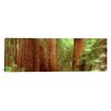 iCanvas Panoramic Redwood Trees, Muir Woods, California Photographic Print on Canvas