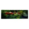 iCanvasArt Panoramic Flowers in a Garden Baltimore, Maryland Photographic Print on Canvas