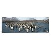 <strong>iCanvasArt</strong> Panoramic King Penguins at St Andrews Bay, South Georgia Island Photographic Print on Canvas