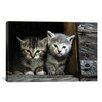 iCanvas Kittens Photographic Print on Canvas