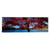 iCanvas Panoramic Close-up of a Tree, Walden Pond, Concord, Massachusetts Photographic Print on Canvas