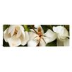 iCanvasArt Panoramic Close-up of Magnolia Flowers Photographic Print on Canvas