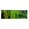 <strong>Panoramic 'Close-up of Leaves' Photographic Print on Canvas</strong> by iCanvasArt