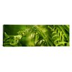 iCanvas Panoramic Close-up of Multiple Images of Ferns Photographic Print on Canvas