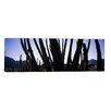 iCanvas Panoramic 'Organ Pipe Cactus National Monument, Arizona' Photographic Print on Canvas