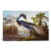 iCanvas 'Louisiana Heron from Birds of America' by John James Audubon Painting Print on Canvas