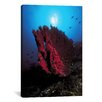 iCanvasArt Marine and Ocean Coral Photographic Print on Canvas in Pink