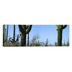 iCanvasArt Panoramic Saguaro National Park, Tucson, Arizona Photographic Print on Canvas