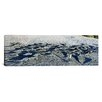 iCanvasArt Panoramic Marine Iguanas on the beach, Galapagos Islands, Ecuador Photographic Print on Canvas