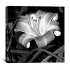 "<strong>iCanvasArt</strong> ""Lily of the Day"" Canvas Wall Art by Harold Silverman - Flowers"