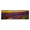iCanvas Panoramic Lavender and Yellow Flower Fields, Sequim, Washington Photographic Print on Canvas