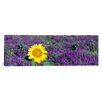 <strong>iCanvasArt</strong> Panoramic Lone Sunflower in Lavender Field, France Photographic Print on Canvas