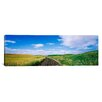 iCanvas Panoramic Whitman County, Washington State Photographic Print on Canvas