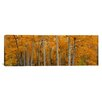 iCanvasArt Panoramic Quaking Aspens Dixie National Forest, Utah Photographic Print on Canvas
