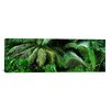 <strong>iCanvasArt</strong> Panoramic 'Palm Fronds and Green Vegetation, Seychelles' Photographic Print on Canvas