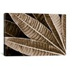 iCanvas Modern Art Sepia Leaves Graphic Art on Canvas