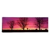 iCanvasArt Panoramic Panoramic Oak Trees, Sunset, Sweden Photographic Print on Canvas