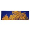 iCanvasArt Panoramic 'Colorado' Photographic Print on Canvas