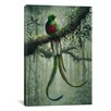 iCanvas Resplendent Quetzal 2 by Harro Maass Photographic Print on Canvas