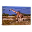 iCanvas Reticulated Giraffe by Pip McFarry Photographic Print on Canvas